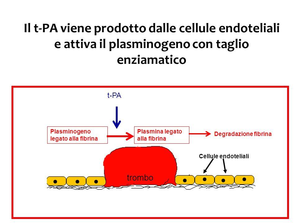 Il t-PA viene prodotto dalle cellule endoteliali e attiva il plasminogeno con taglio enziamatico