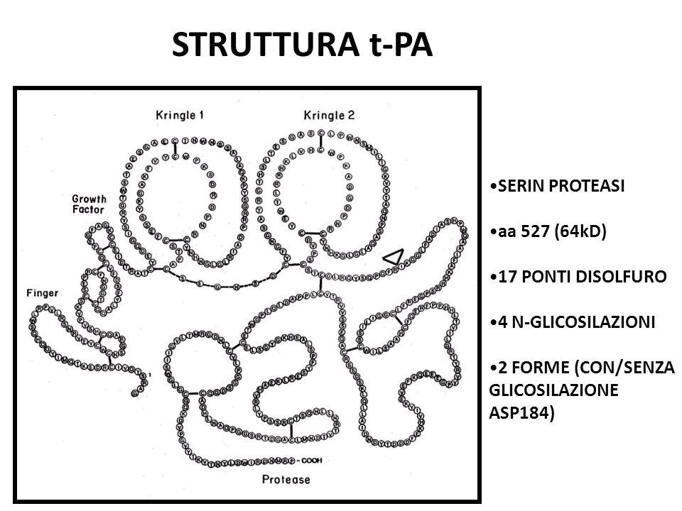 STRUTTURA t-PA SERIN PROTEASI aa 527 (64kD) 17 PONTI DISOLFURO
