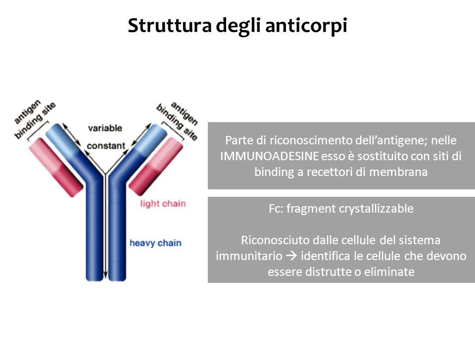 Struttura degli anticorpi