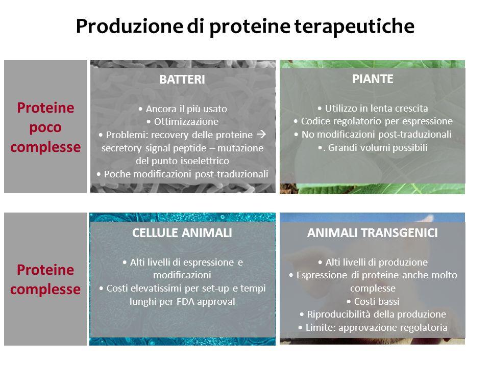 Produzione di proteine terapeutiche