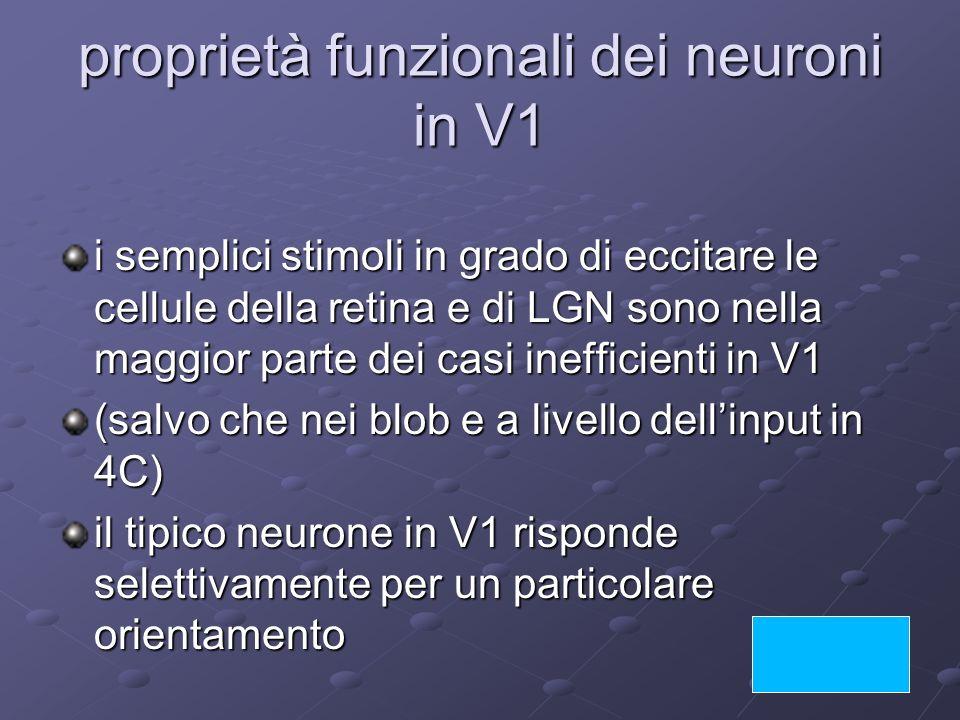 proprietà funzionali dei neuroni in V1