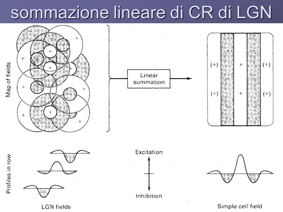sommazione lineare di CR di LGN