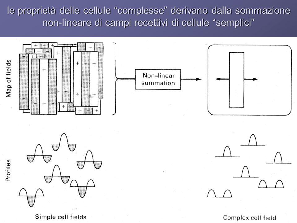 le proprietà delle cellule complesse derivano dalla sommazione non-lineare di campi recettivi di cellule semplici