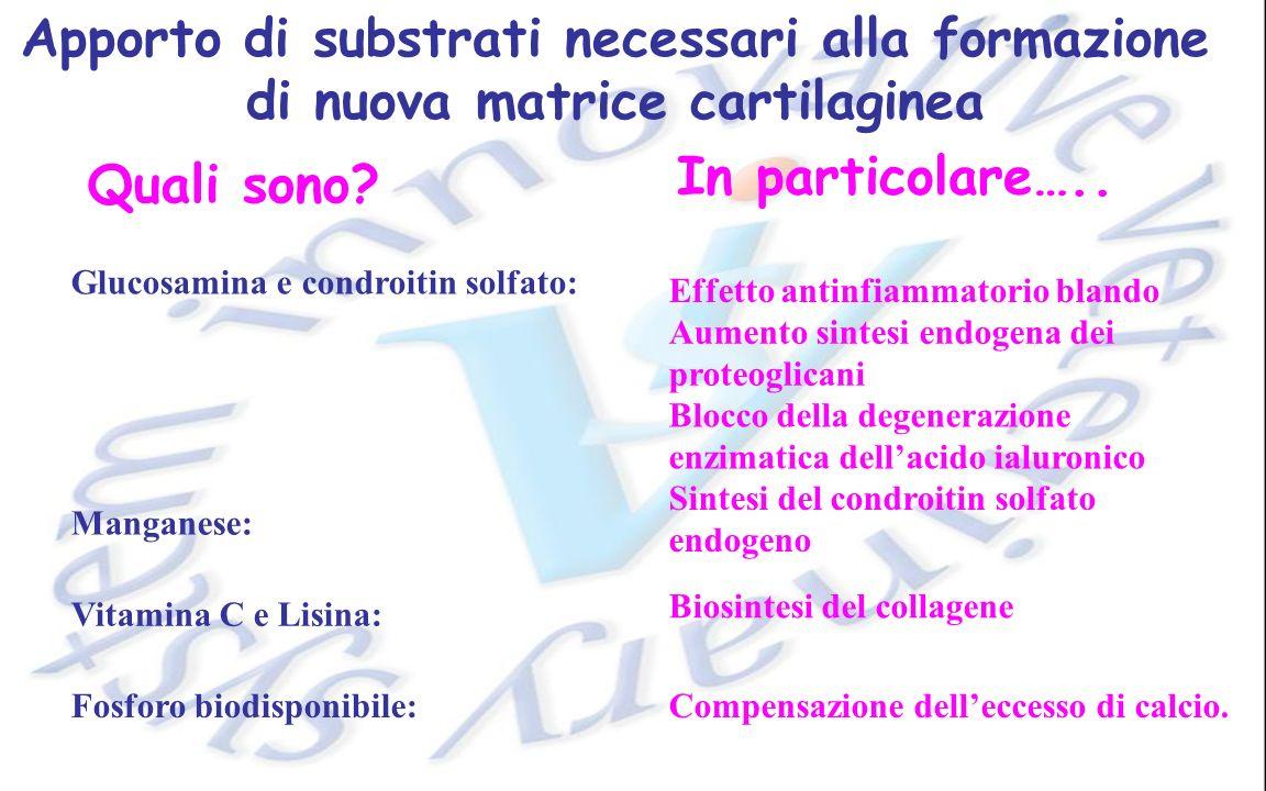 Apporto di substrati necessari alla formazione di nuova matrice cartilaginea