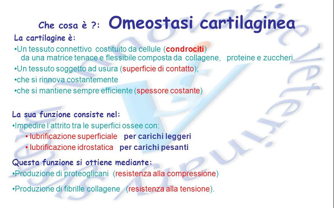 Che cosa è : Omeostasi cartilaginea