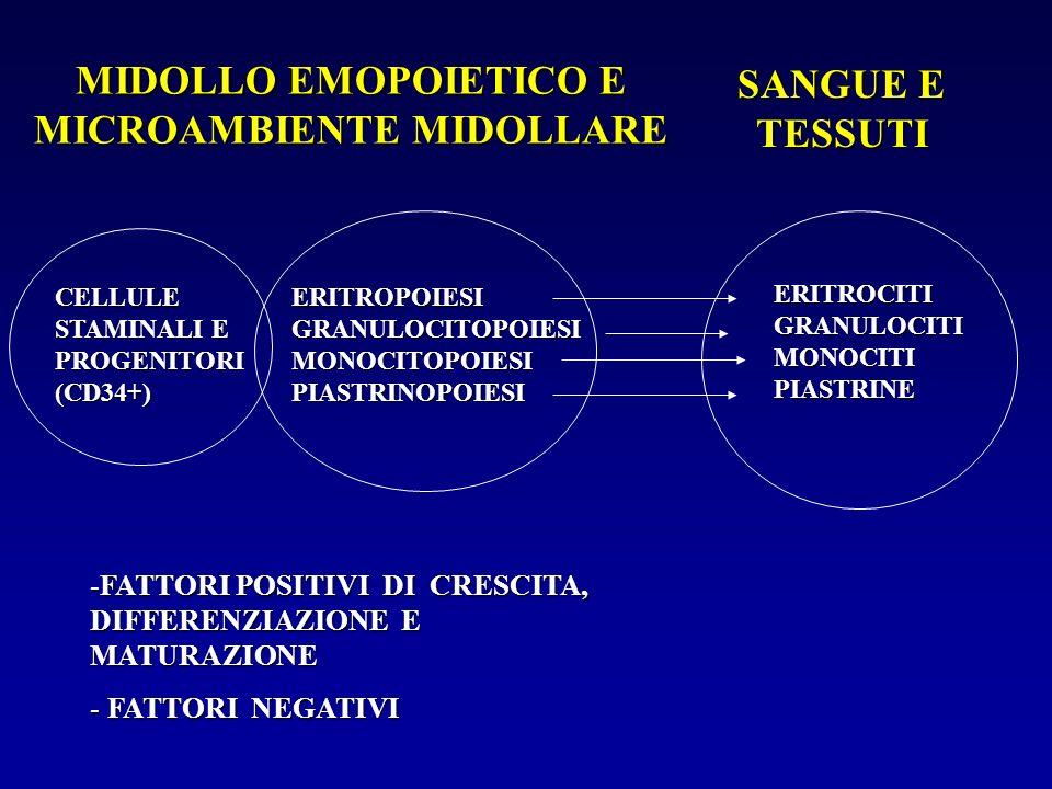 MIDOLLO EMOPOIETICO E MICROAMBIENTE MIDOLLARE