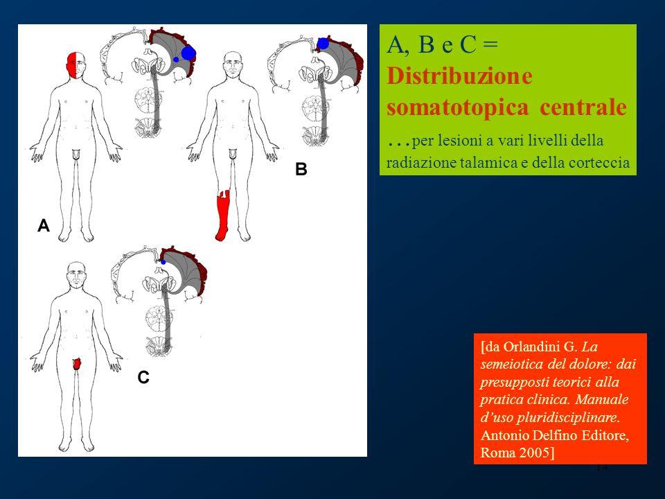 A, B e C = Distribuzione somatotopica centrale …per lesioni a vari livelli della radiazione talamica e della corteccia