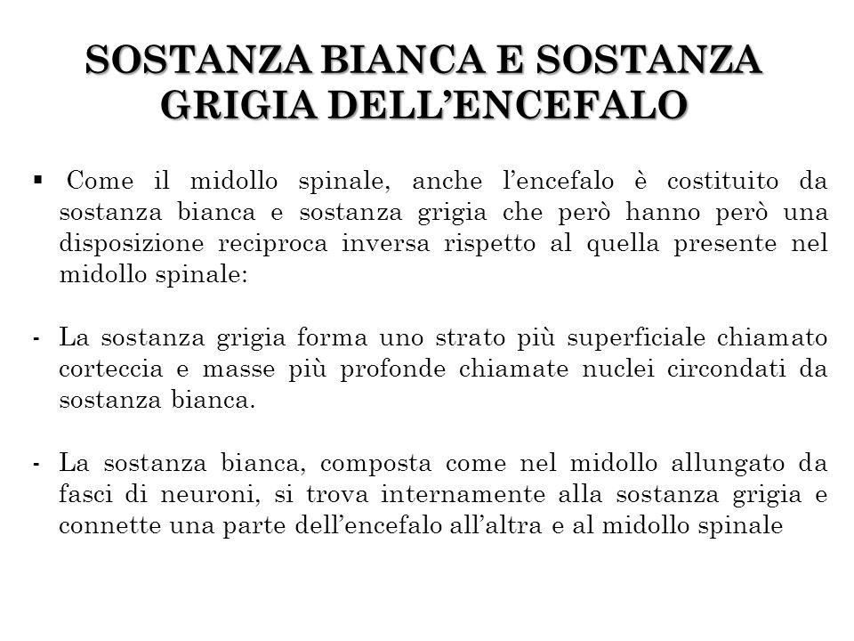 SOSTANZA BIANCA E SOSTANZA GRIGIA DELL'ENCEFALO