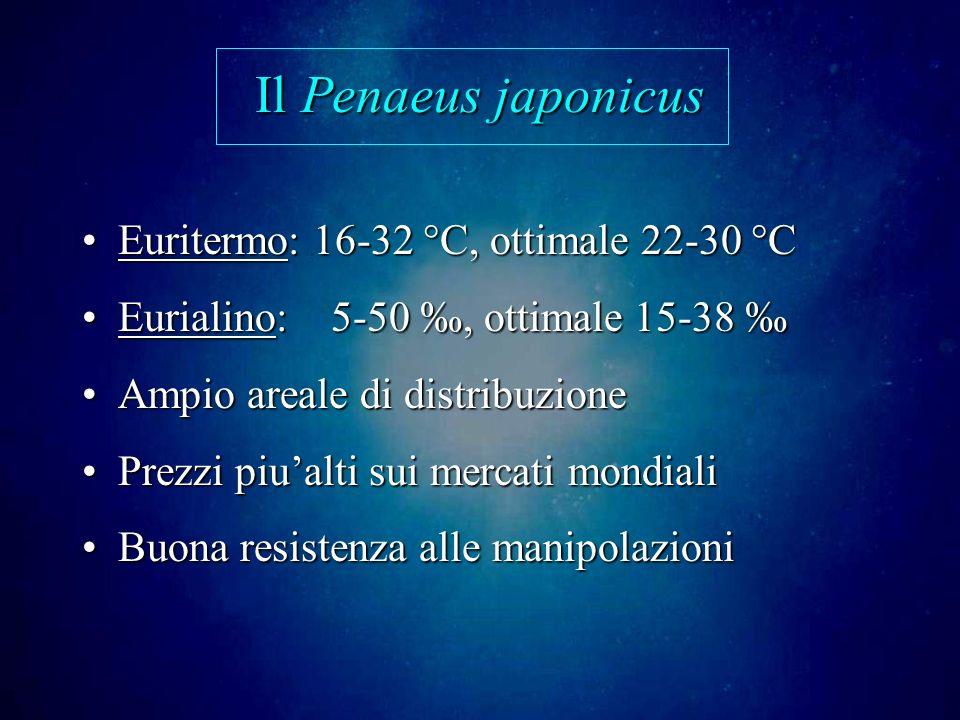 Il Penaeus japonicus Euritermo: 16-32 °C, ottimale 22-30 °C