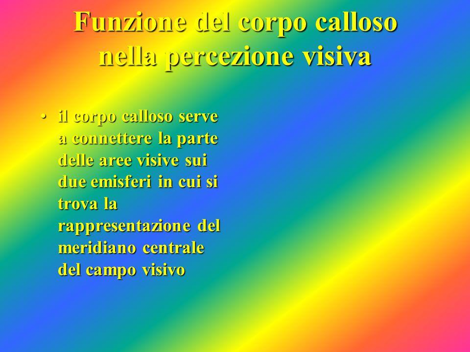 Funzione del corpo calloso nella percezione visiva