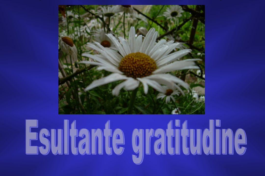 Esultante gratitudine