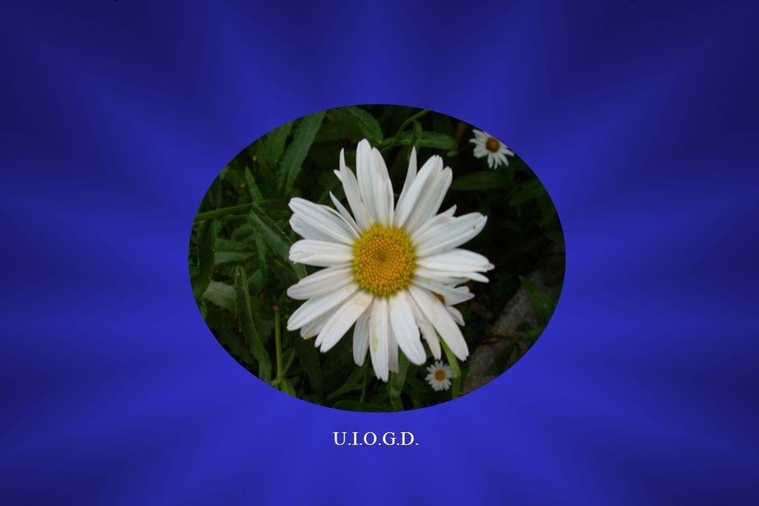 U.I.O.G.D. 1