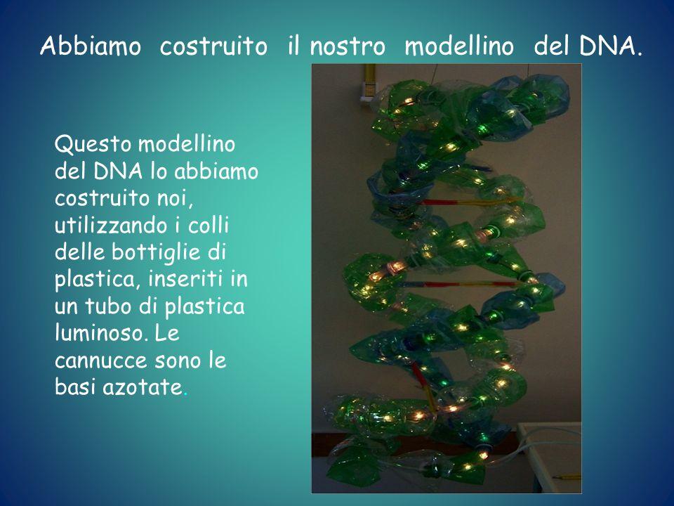 Abbiamo costruito il nostro modellino del DNA.