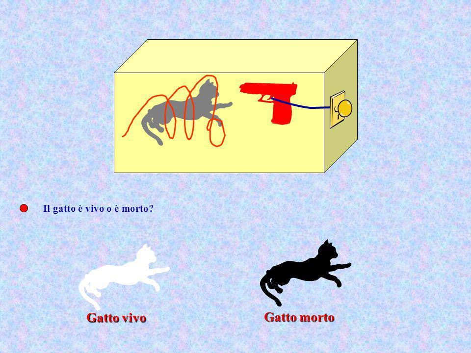 Il gatto è vivo o è morto Gatto morto Gatto vivo