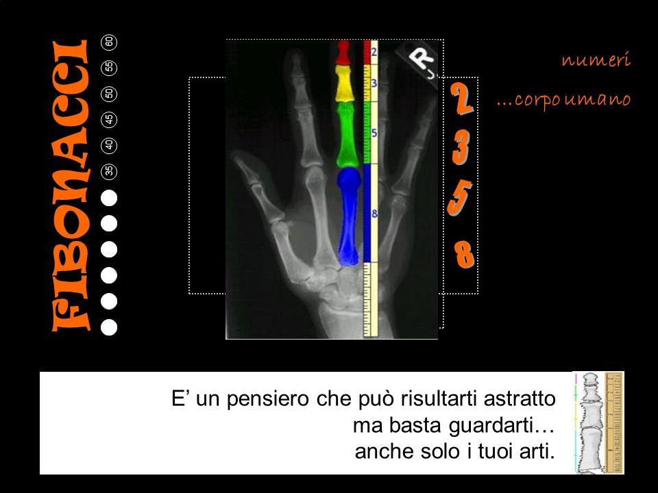 FIBONACCI 2 3 5 8 numeri …corpo umano