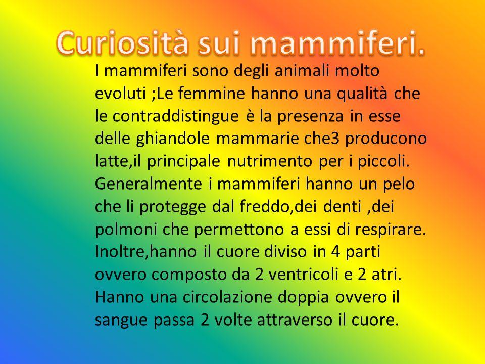 Curiosità sui mammiferi.