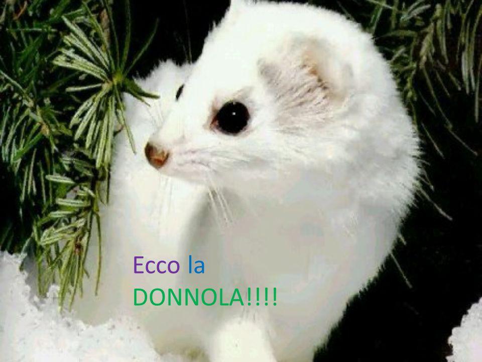 Ecco la DONNOLA!!!!