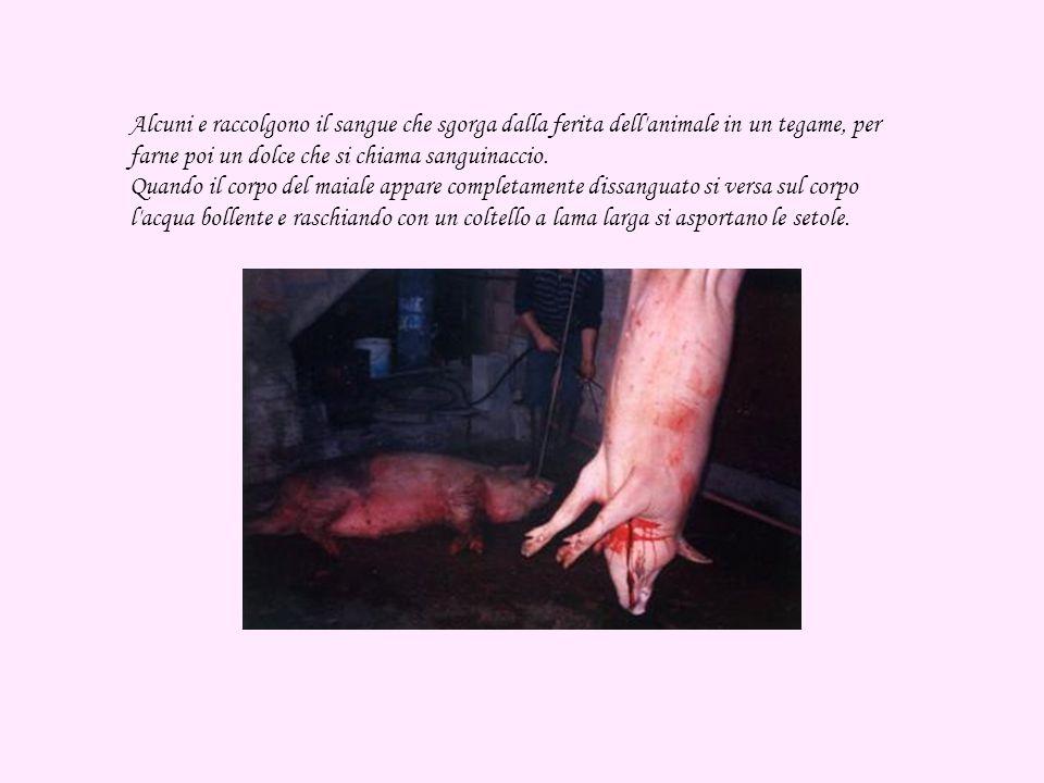Alcuni e raccolgono il sangue che sgorga dalla ferita dell animale in un tegame, per farne poi un dolce che si chiama sanguinaccio.