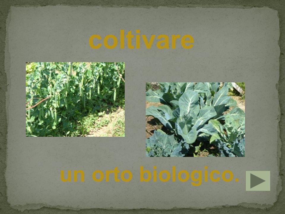 coltivare un orto biologico.
