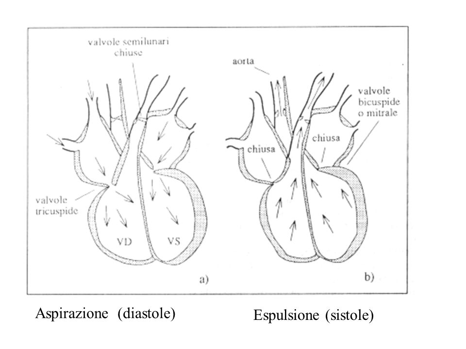 Aspirazione (diastole)