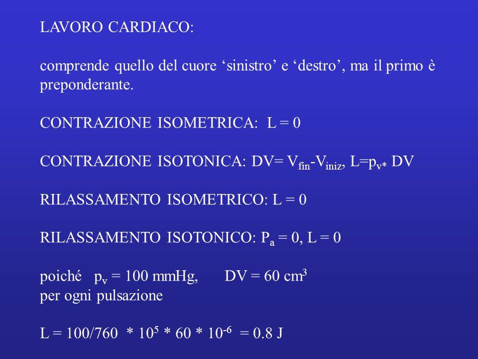 LAVORO CARDIACO: comprende quello del cuore 'sinistro' e 'destro', ma il primo è. preponderante. CONTRAZIONE ISOMETRICA: L = 0.