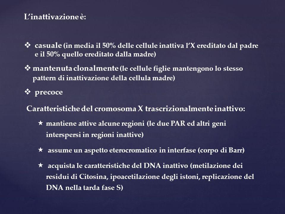 Caratteristiche del cromosoma X trascrizionalmente inattivo: