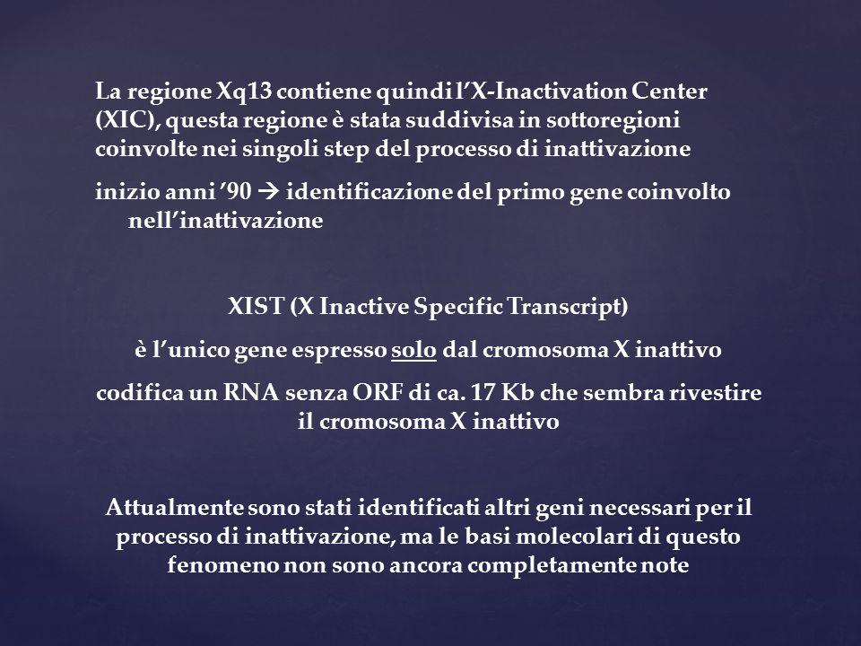 XIST (X Inactive Specific Transcript)