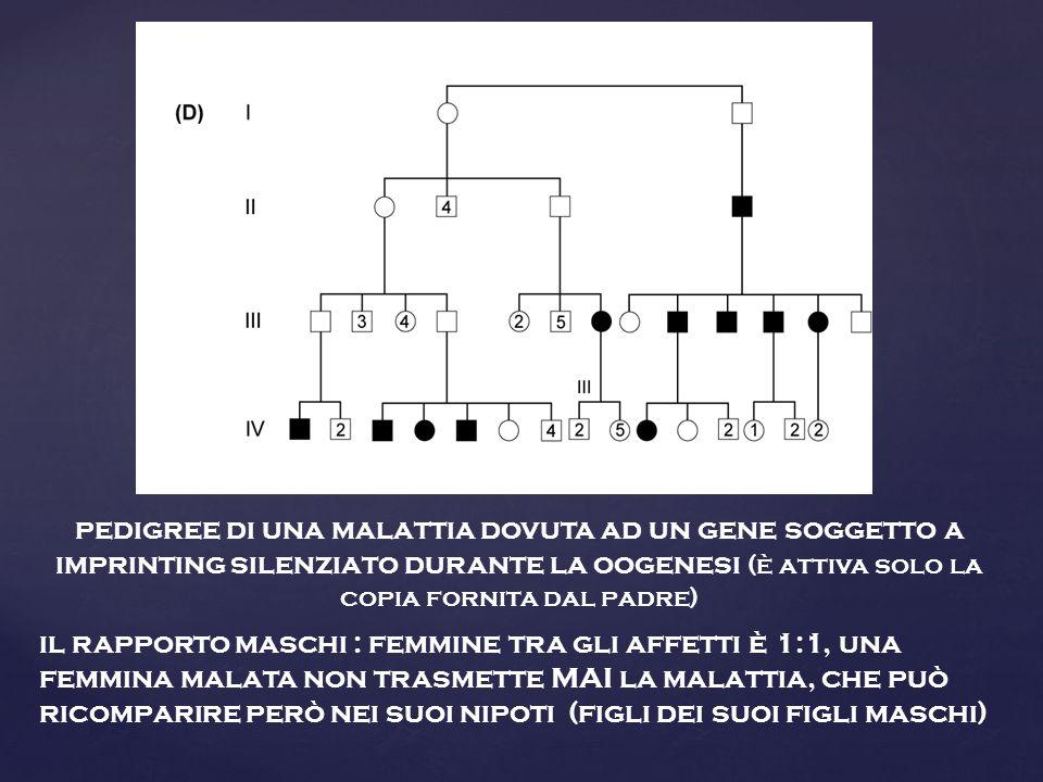 pedigree di una malattia dovuta ad un gene soggetto a imprinting silenziato durante la oogenesi (è attiva solo la copia fornita dal padre)