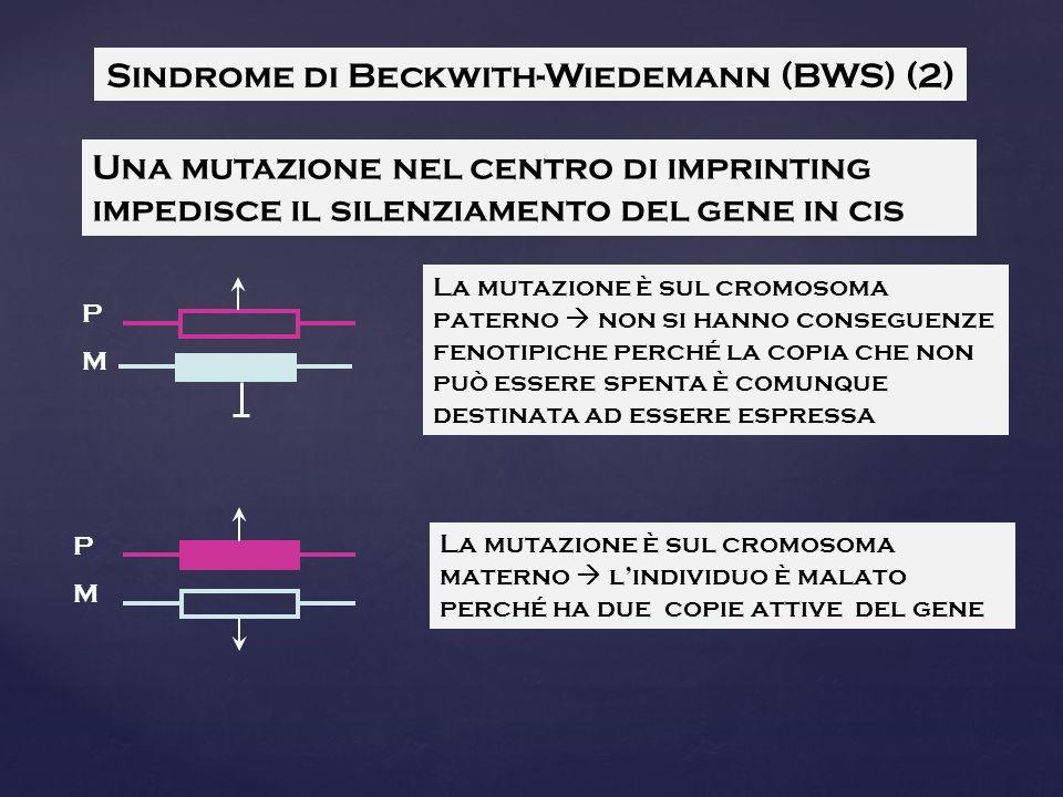 Sindrome di Beckwith-Wiedemann (BWS) (2)