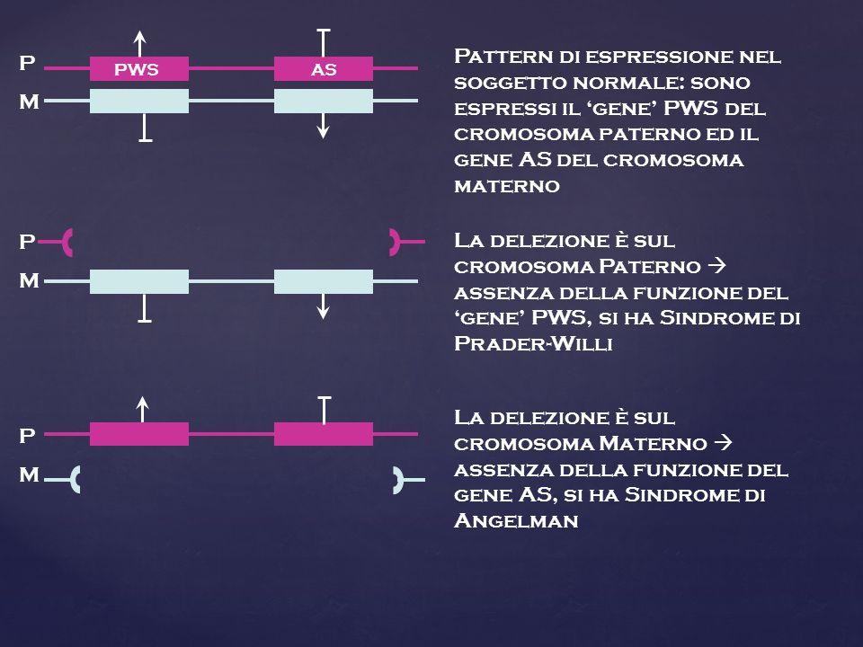 Pattern di espressione nel soggetto normale: sono espressi il 'gene' PWS del cromosoma paterno ed il gene AS del cromosoma materno