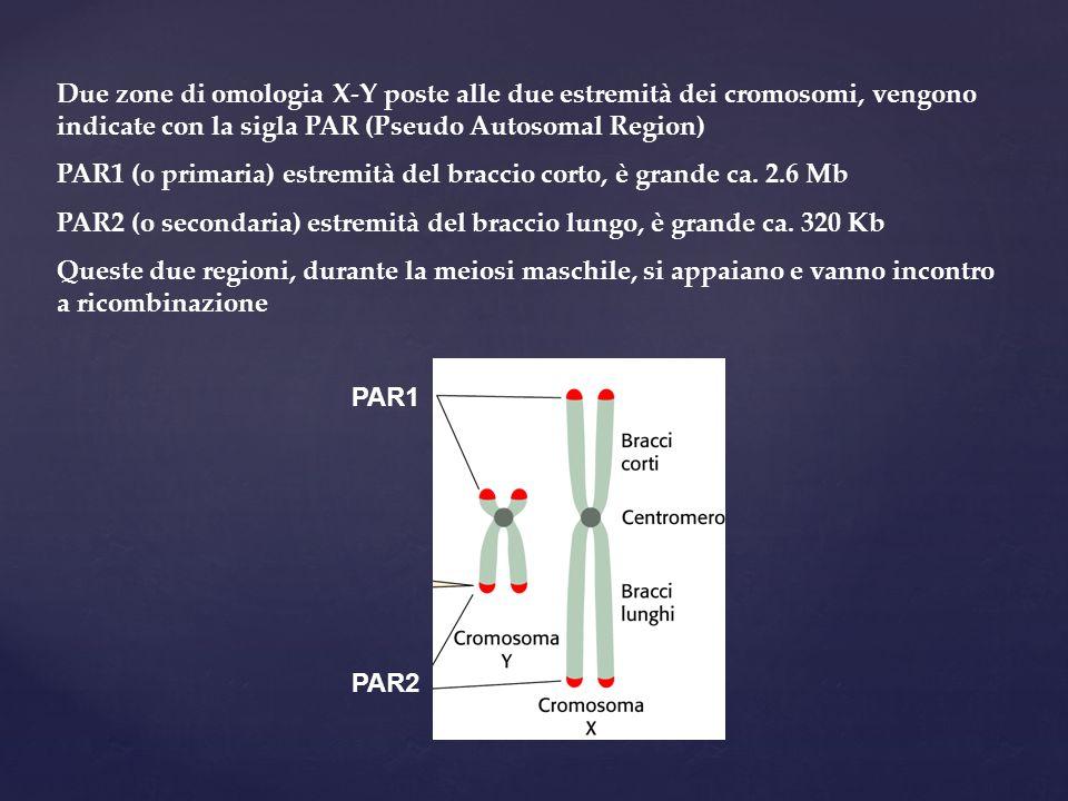 Due zone di omologia X-Y poste alle due estremità dei cromosomi, vengono indicate con la sigla PAR (Pseudo Autosomal Region)