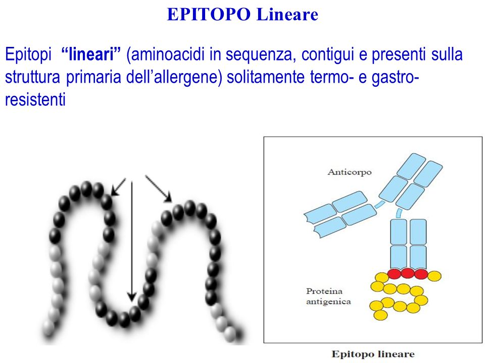 EPITOPO Lineare