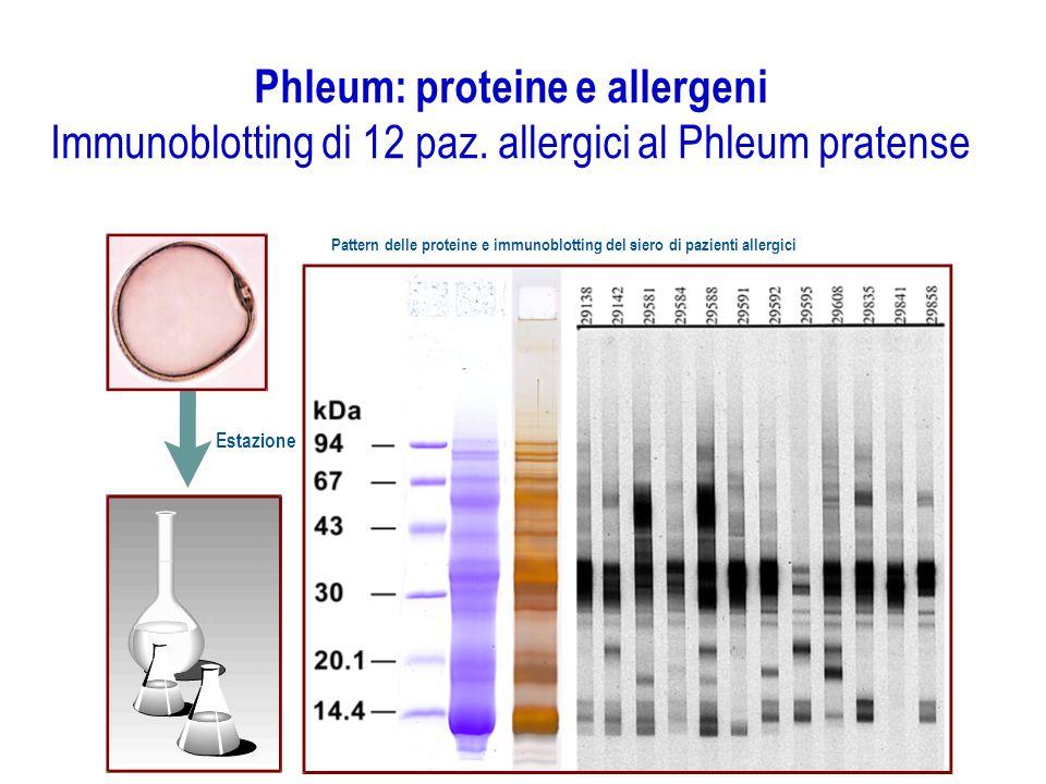 Phleum: proteine e allergeni