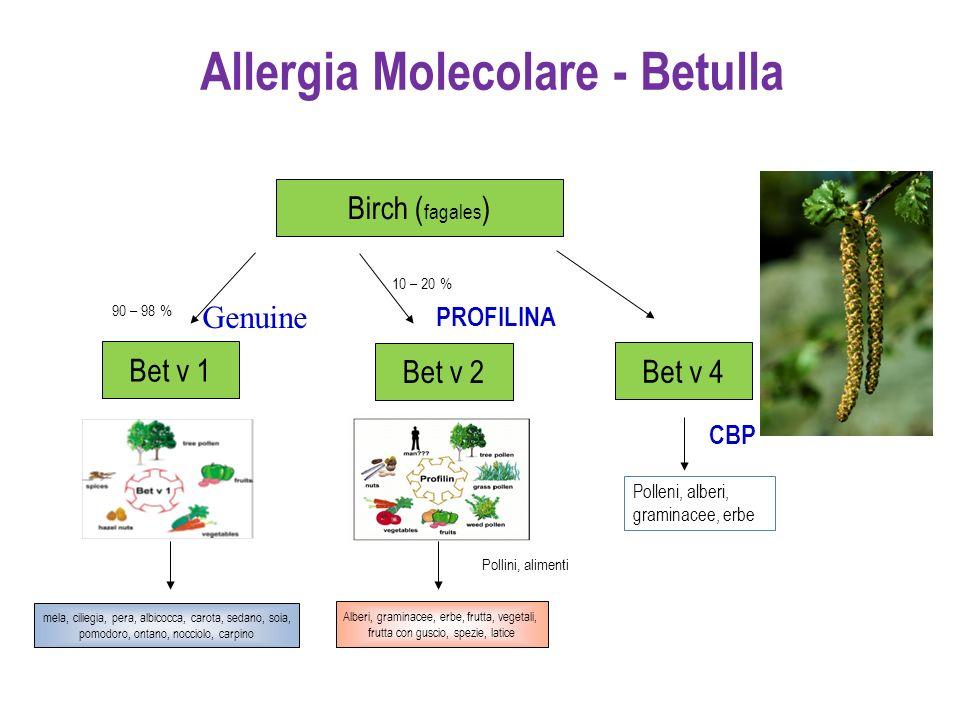 Allergia Molecolare - Betulla