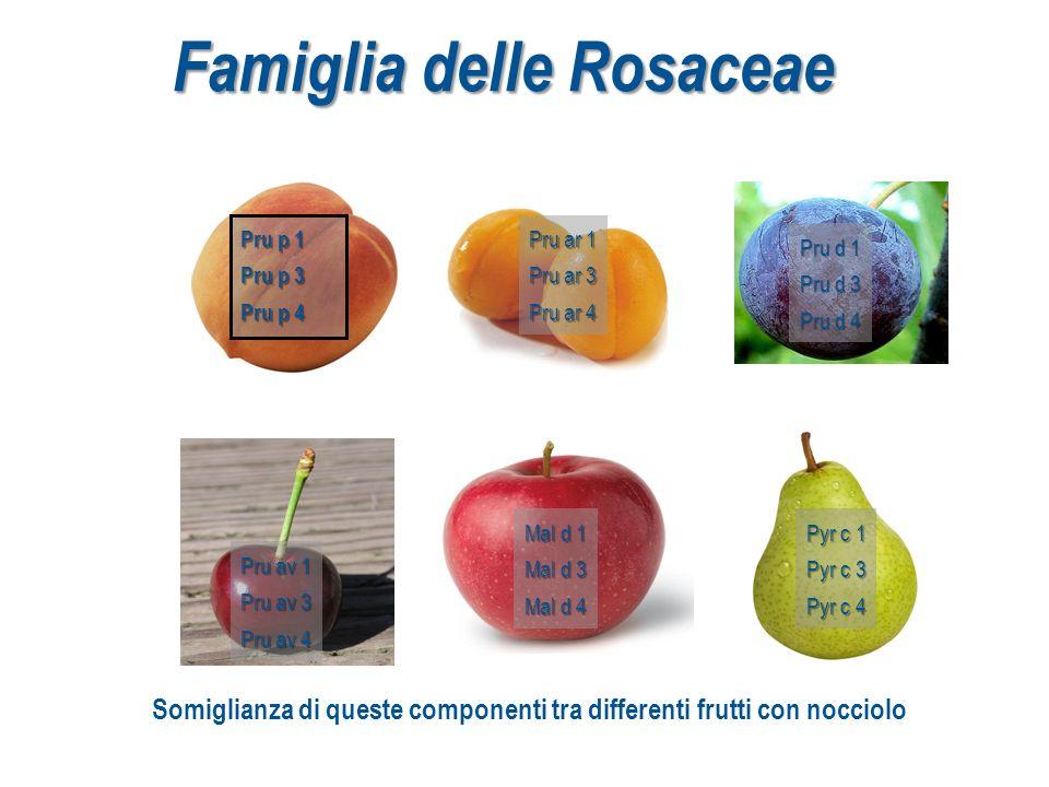 Famiglia delle Rosaceae