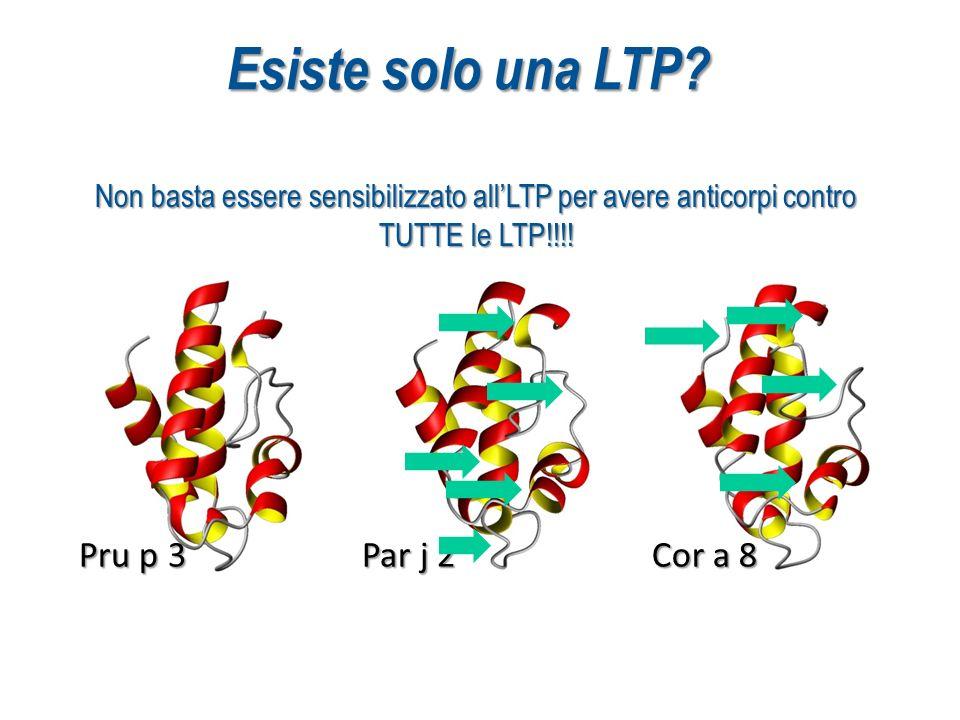 Esiste solo una LTP Pru p 3 Par j 2 Cor a 8