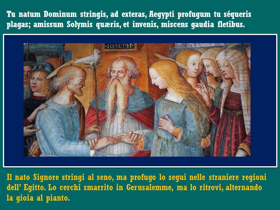 Tu natum Dominum stringis, ad exteras, Aegypti profugum tu séqueris plagas; amissum Solymis quæris, et invenis, miscens gaudia fletibus.