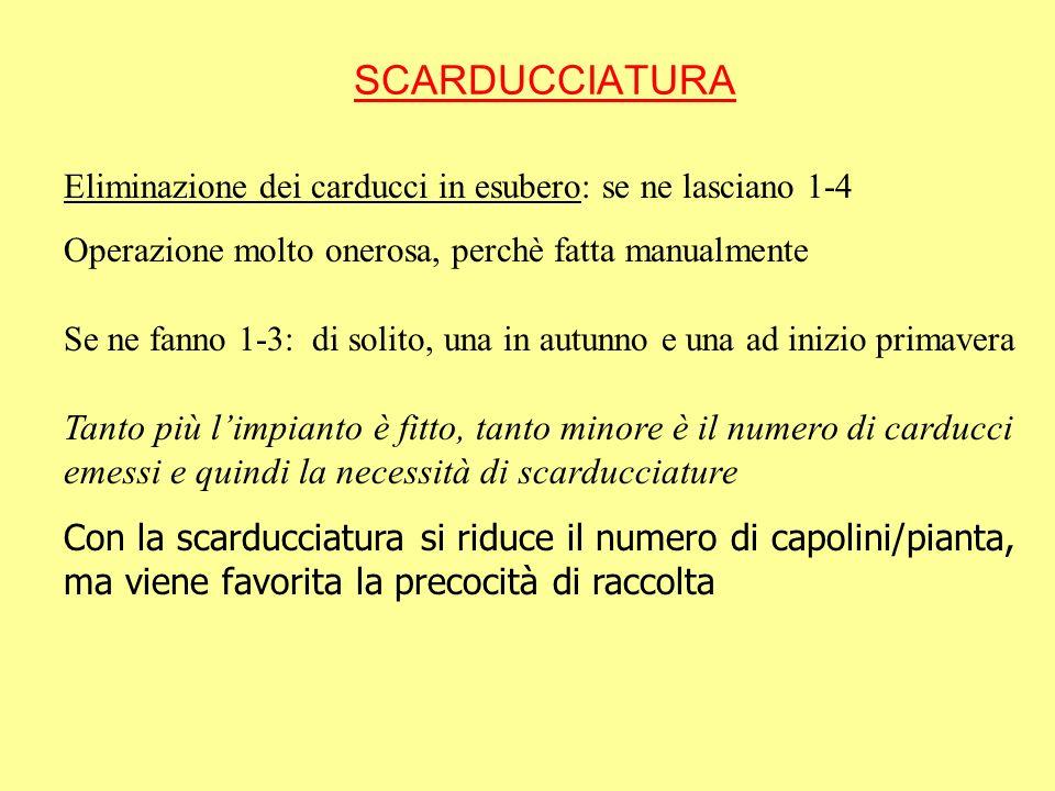 SCARDUCCIATURA Eliminazione dei carducci in esubero: se ne lasciano 1-4. Operazione molto onerosa, perchè fatta manualmente.