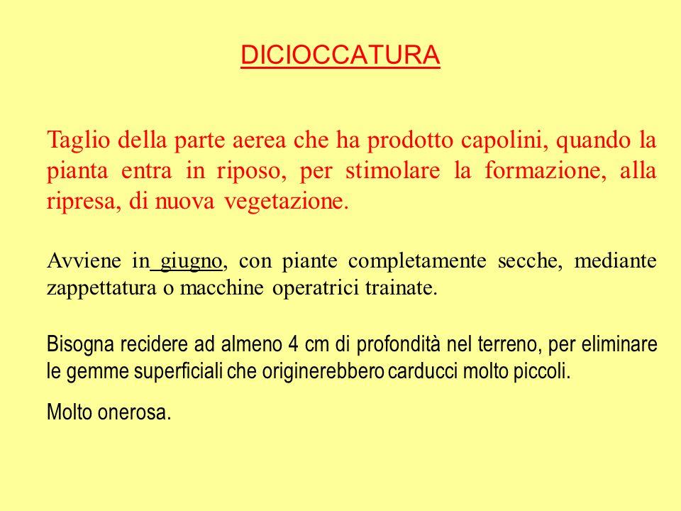 DICIOCCATURA
