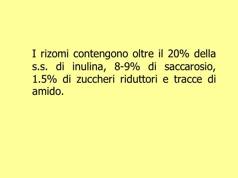 I rizomi contengono oltre il 20% della s. s