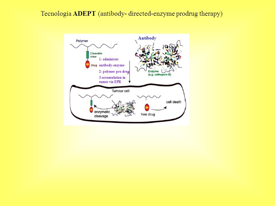 Tecnologia ADEPT (antibody- directed-enzyme prodrug therapy)