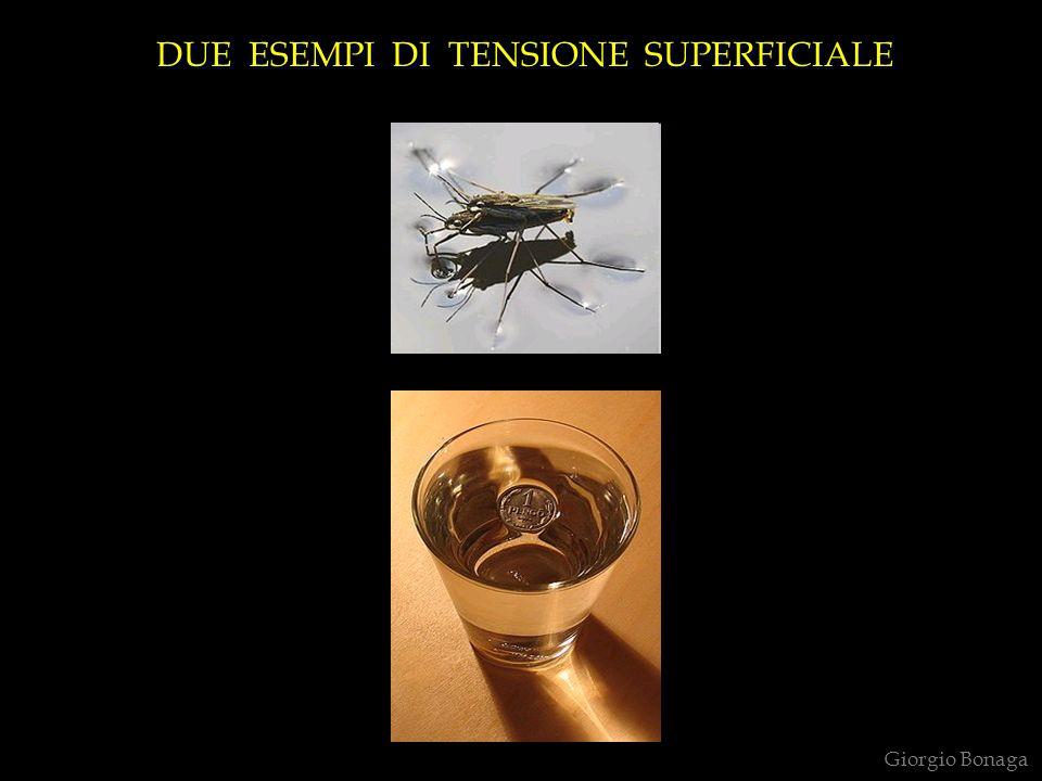 DUE ESEMPI DI TENSIONE SUPERFICIALE