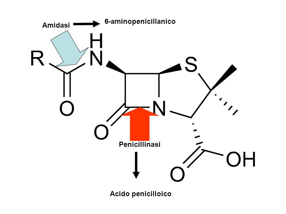 6-aminopenicillanico Amidasi Penicillinasi Acido penicilloico