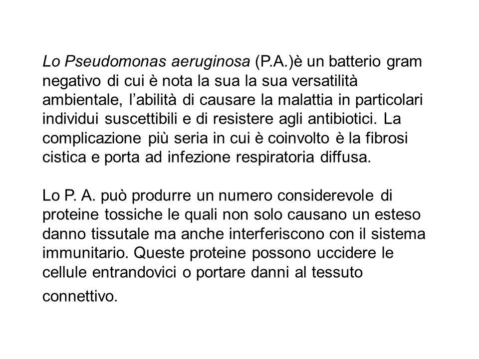 Lo Pseudomonas aeruginosa (P. A