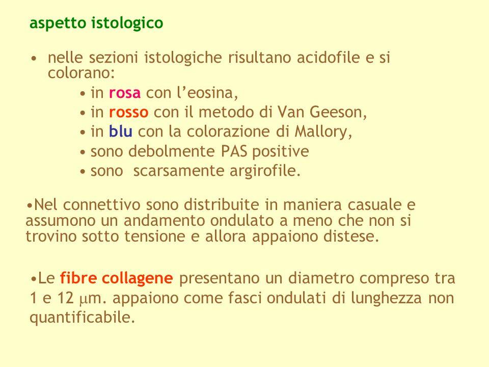 aspetto istologico nelle sezioni istologiche risultano acidofile e si colorano: in rosa con l'eosina,