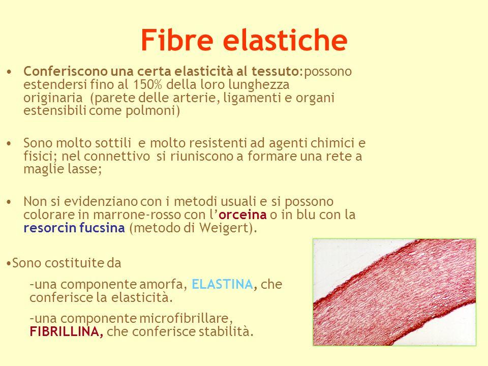 Fibre elastiche
