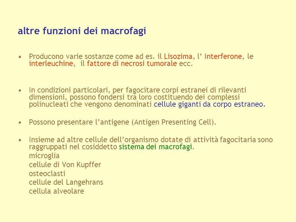 altre funzioni dei macrofagi