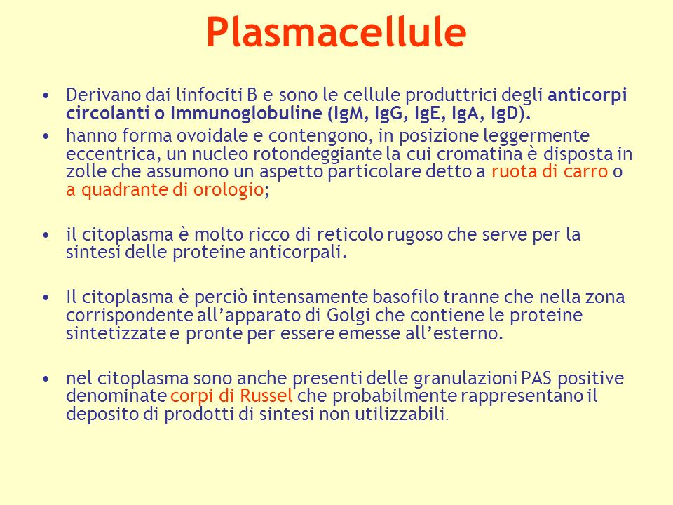 Plasmacellule Derivano dai linfociti B e sono le cellule produttrici degli anticorpi circolanti o Immunoglobuline (IgM, IgG, IgE, IgA, IgD).