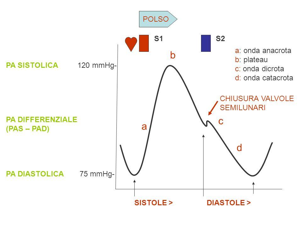 b c a d POLSO S1 S2 a: onda anacrota b: plateau c: onda dicrota