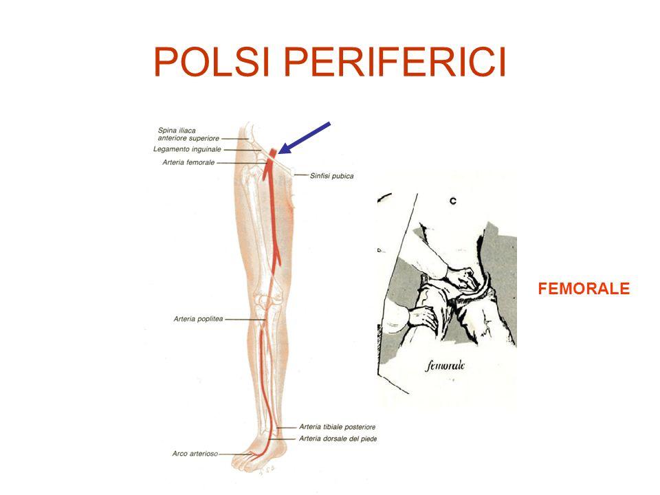 POLSI PERIFERICI FEMORALE